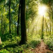 The Illuminated Path Through Midlife Crisis